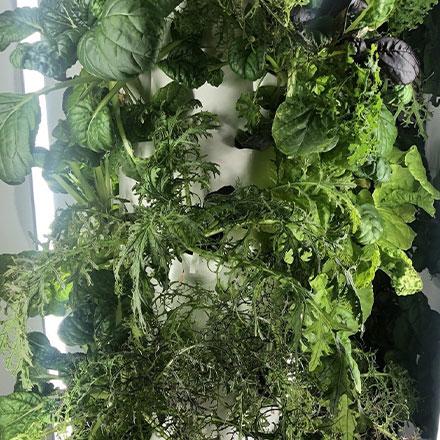waterline square social instagram indoor gardening post